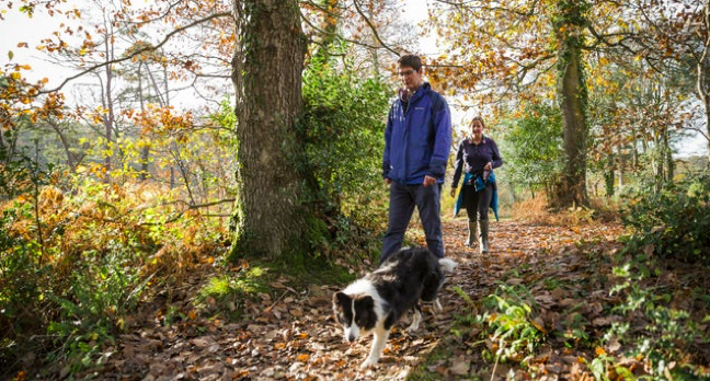 A man, woman and their black and white dog walking through the forest, there are leaves on the ground and the sun is shining through green trees.