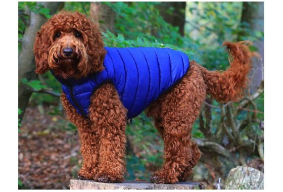 Puffer Jacket for dogs